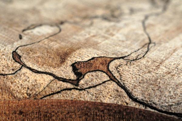 Spalted Maple: il fascino dei funghi