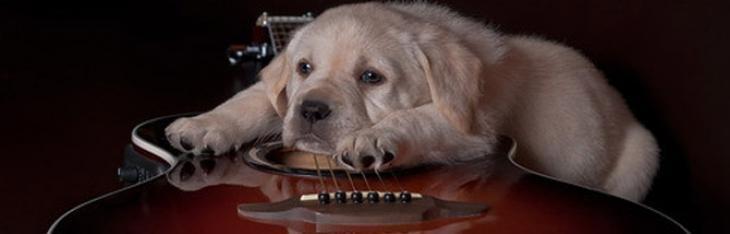 Lap Dog Blues
